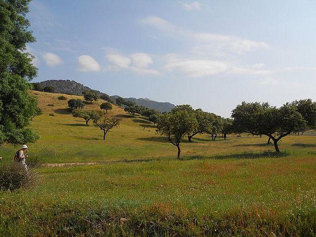 Subida por el camino viejo hasta el Lugar Nuevo (Andújar)